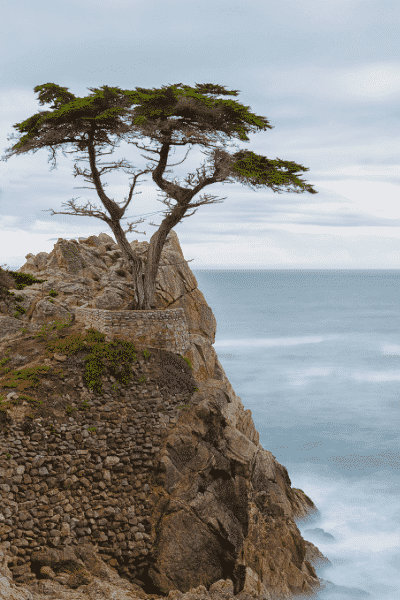 The Lone Cypress in Pebble Beach