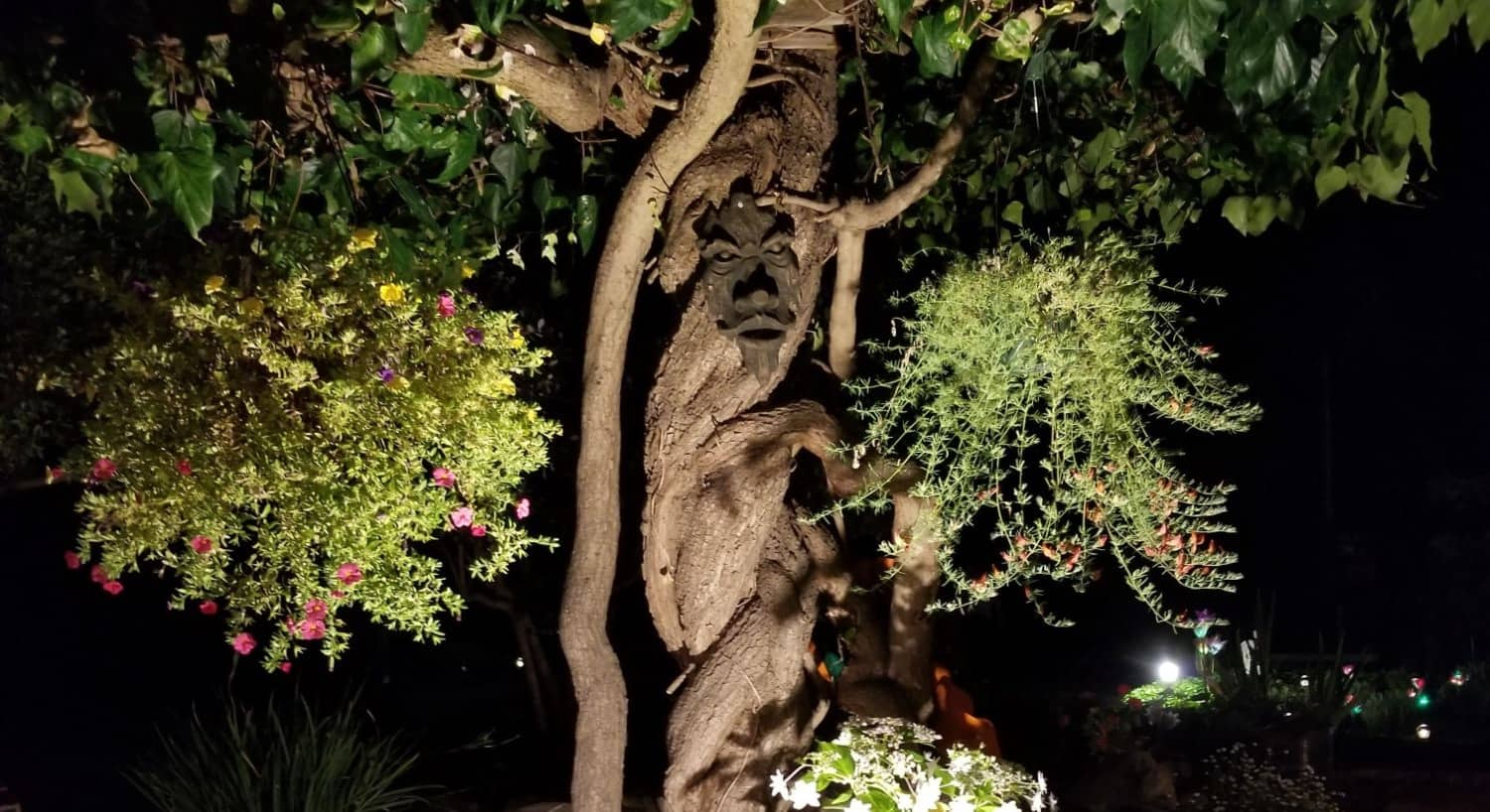 View of tree with twisted trunk and wooden mask at night with a spotlight surrounded by hanging flowers baskets