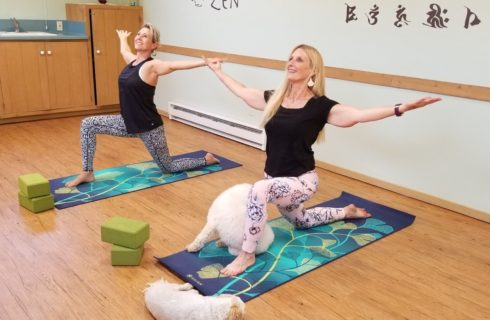 Two ladies in a yoga studio doing yoga poses on multicolored yoga mats with two white fluffy dogs nearby
