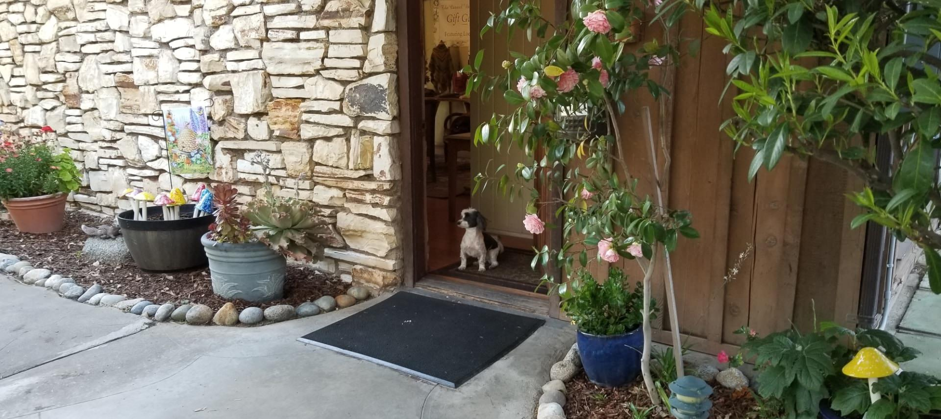 Exterior view of property with layered stone walls, concrete sidewalk edged with rocks and large flower pots, and small white and black dog at the door