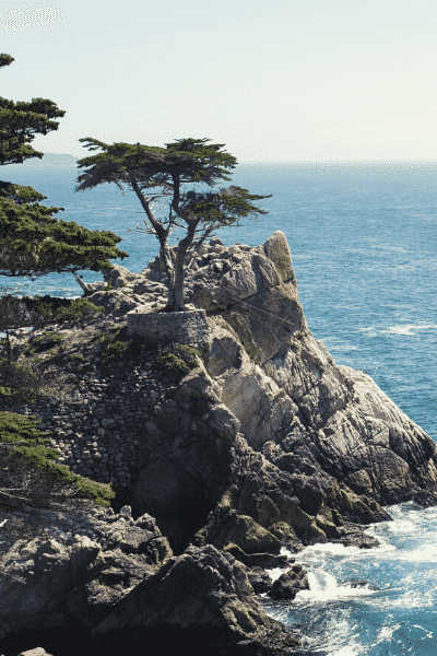 Monterey's famous Lone Cypress