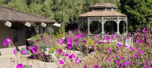 Gazebo surrounded by stone patio and walkway with many purple flowers and other green plants